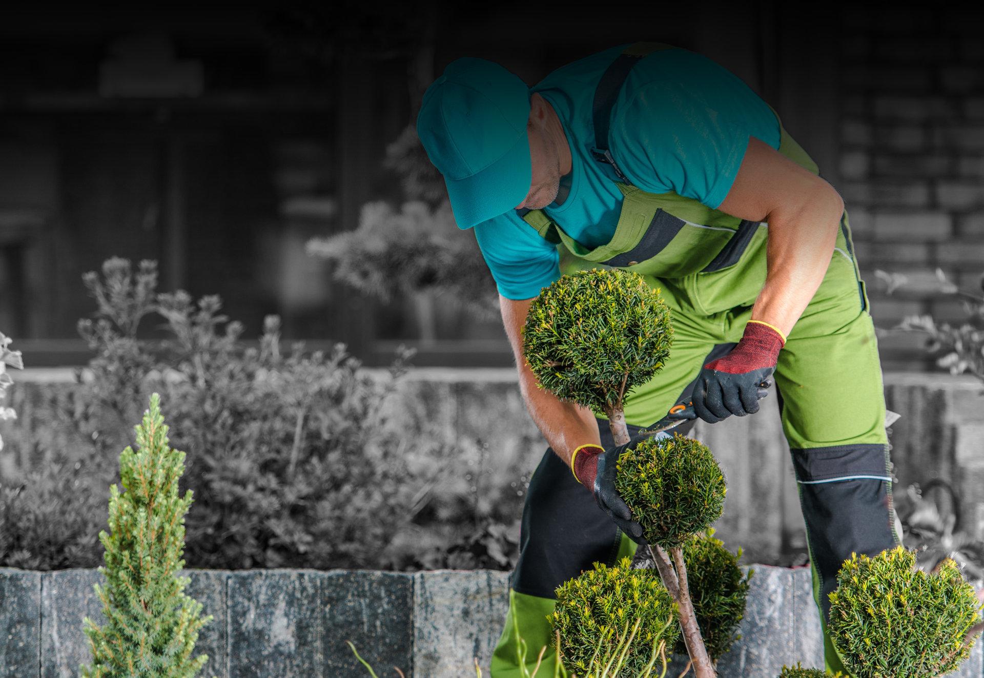 Treescapes Garden Services